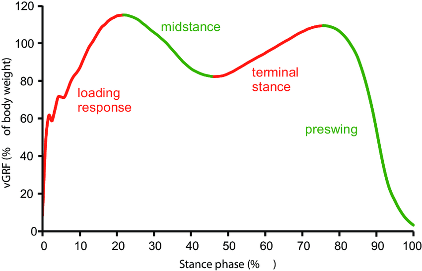 Subphases-of-the-gait-stance-phase-vGRF-vertical-ground-reaction-force